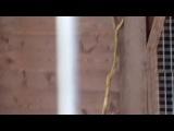 совы в японском павильоне